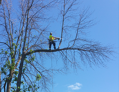 Richmond Hill Tree Removal
